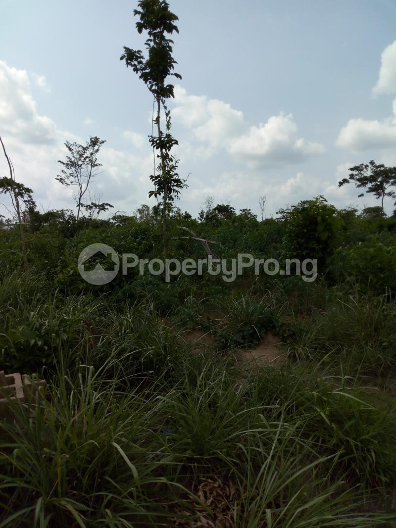 Commercial Land Land for sale Iddo town off ido motor park Ido Oyo - 2