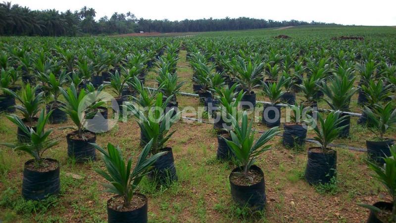 Land for sale Along Iseyin Ibadan expressway  Kilometer 8 from iseyin, is just 4 minutes drive  From road, iseyin LG Iseyin Oyo - 0