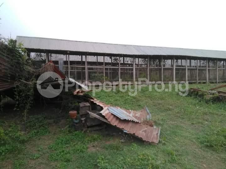 Commercial Land for sale E Offa-Igbo Lagelu Oyo - 1