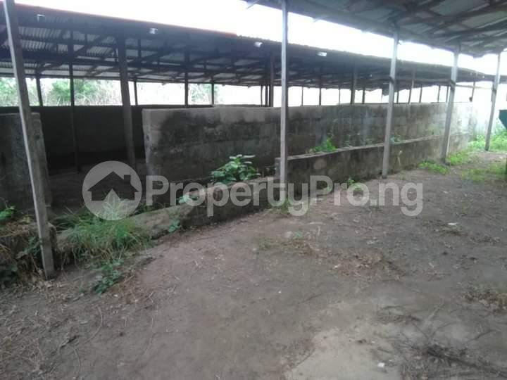 Commercial Land for sale E Offa-Igbo Lagelu Oyo - 12