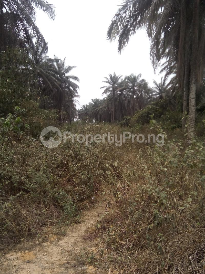 Mixed   Use Land Land for sale Just before Obehie junction, Abia State Ukwa West Abia - 2