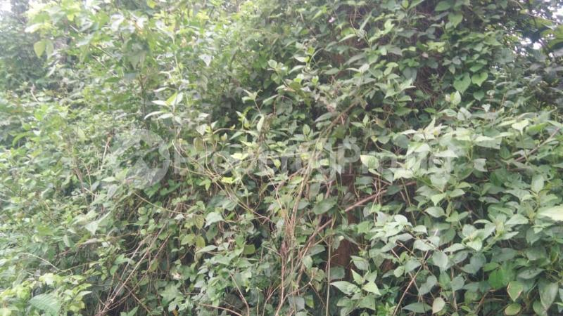 Land for sale At Different Locations Ejioku Lagelu Oyo - 1