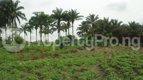 Land for sale Asungboro village off Iseyin Abeokuta  Expressway, Iseyin LG, Oyo state, 30 minutes  Drive from the road Iseyin Oyo - 2