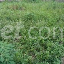 Land for sale Umuhu Ngor-Okpala Imo - 0