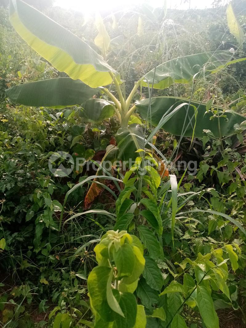 Commercial Land Land for sale 150 Ijado Road Kudu. Back Of Federal Polytechnic Ilaro Yewa South Yewa Ogun - 1