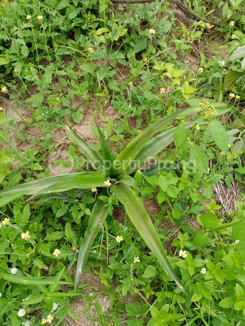 Commercial Land Land for sale 150 Ijado Road Kudu. Back Of Federal Polytechnic Ilaro Yewa South Yewa Ogun - 2