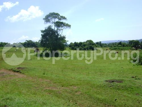 Land for sale  Behind Shina farm Iseyin Oyo express  Way, opposite Oje village, iseyin LG Iseyin Oyo - 1
