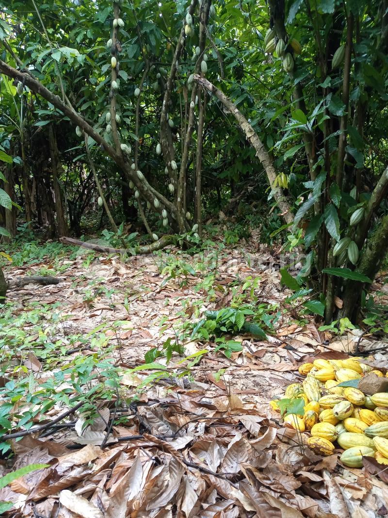 Mixed   Use Land Land for sale Asam bush. Land borders Kpansia market, opolo, elebele Yenegoa Bayelsa - 3