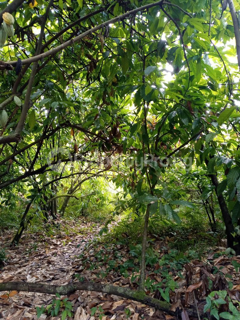 Mixed   Use Land Land for sale Asam bush. Land borders Kpansia market, opolo, elebele Yenegoa Bayelsa - 0
