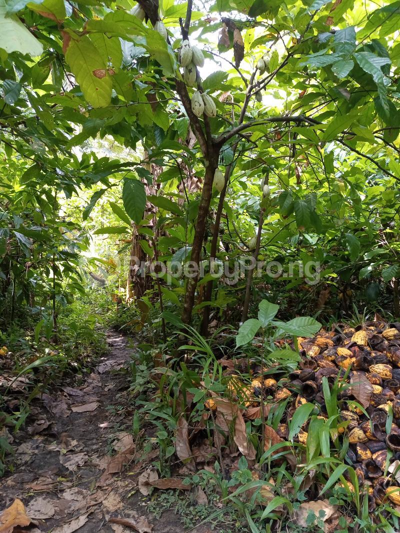 Mixed   Use Land Land for sale Asam bush. Land borders Kpansia market, opolo, elebele Yenegoa Bayelsa - 4