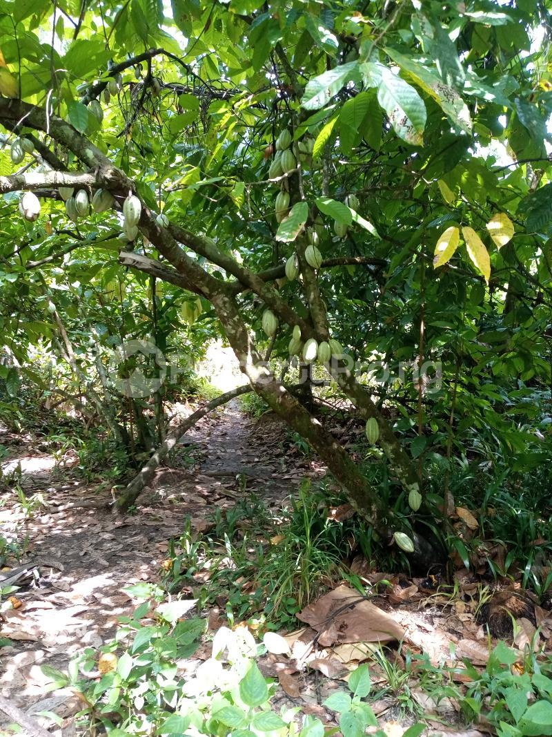 Mixed   Use Land Land for sale Asam bush. Land borders Kpansia market, opolo, elebele Yenegoa Bayelsa - 1