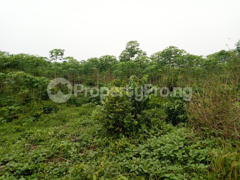 Commercial Land Land for sale sukuru village, Iyana offa off iwo road Iwo Rd Ibadan Oyo - 2