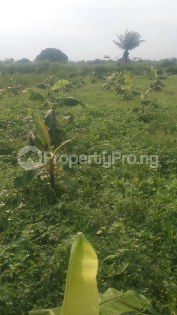 Commercial Land Land for sale Odogbolu Ogun - 3
