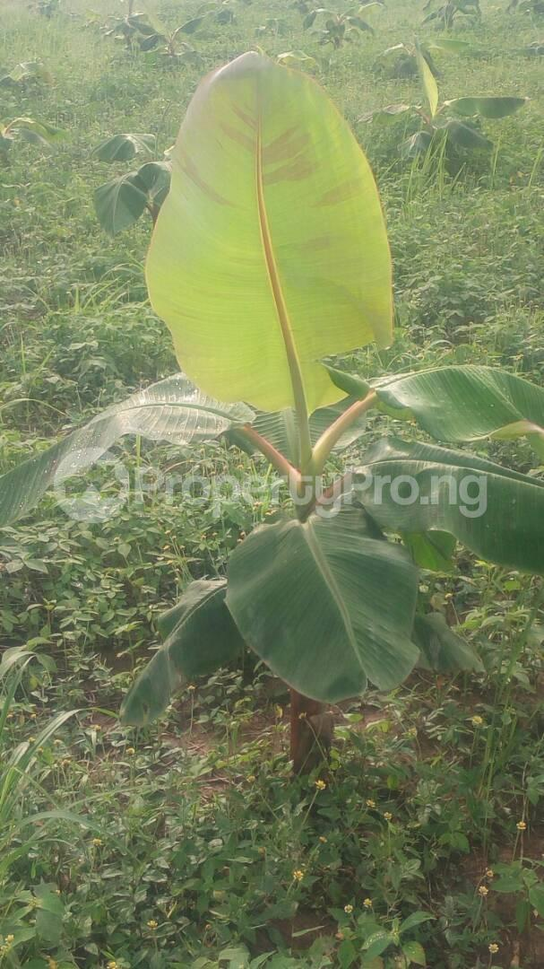 Commercial Land Land for sale Odogbolu Ogun - 0