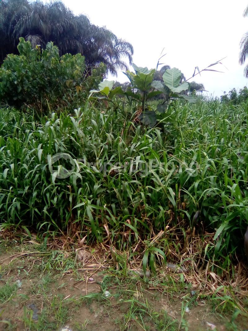 Residential Land Land for sale Egbeleukwu, Umuona Chokota along Ebele 4 Etche Rivers - 0
