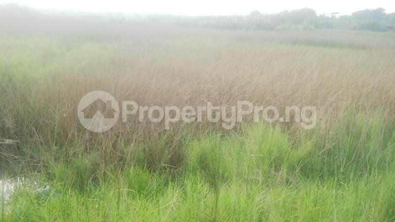Land for sale Opposite Trade Fair Complex Ojo Ojo Lagos - 2