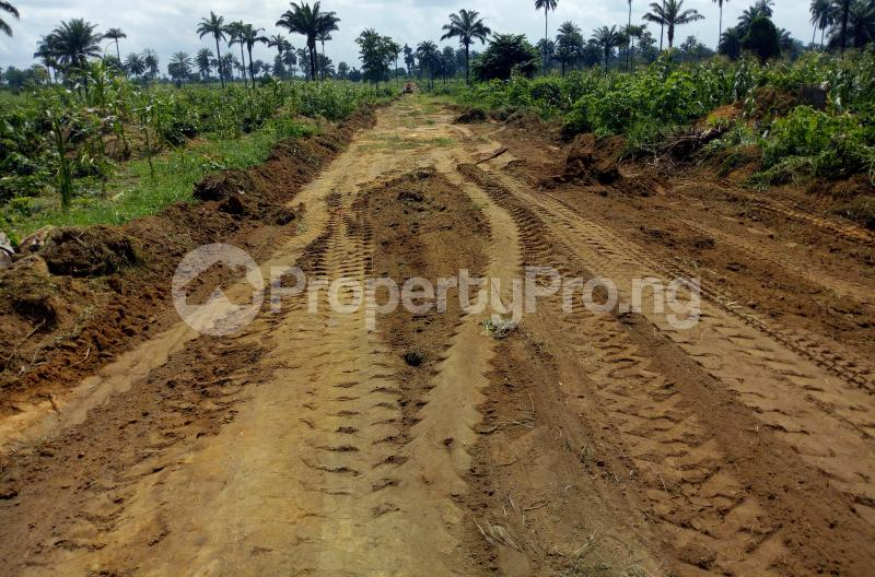 Mixed   Use Land Land for sale Abara Etche Rivers - 1
