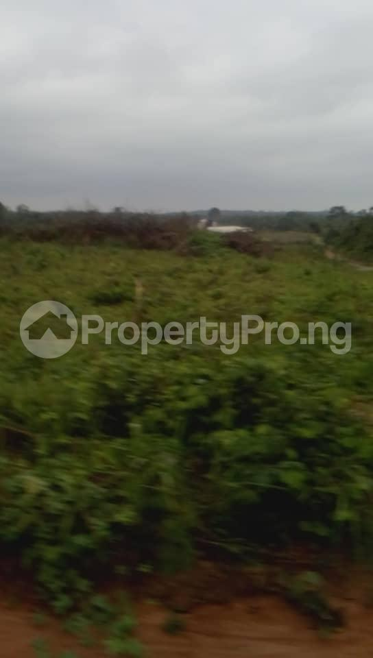 Commercial Land Land for sale Located Beside An Already Existing Poultry Farm At Ladeke Village Off Itokin Road Epe Lagos Nigeria  Epe Road Epe Lagos - 0