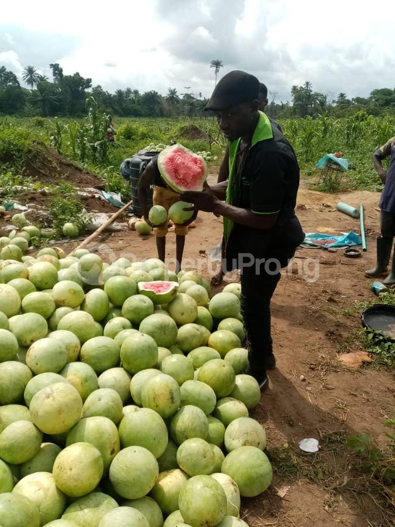 Tank Farm Commercial Property for sale WestAgro Farm located at Ode Remo Ogun State is the fastest growing farm in the country Ode Remo Remo North Ogun - 3