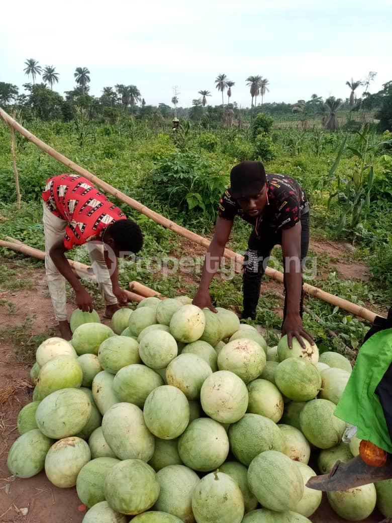 Tank Farm Commercial Property for sale WestAgro Farm located at Ode Remo Ogun State is the fastest growing farm in the country Ode Remo Remo North Ogun - 8