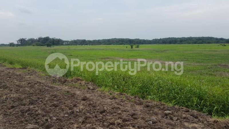 Land for sale Oshodi Gbagada express way Oshodi Expressway Oshodi Lagos - 0