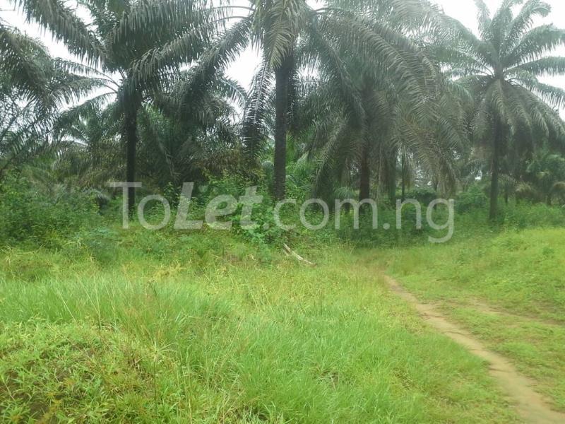 Land for sale Cross River/ekang Road Odukpani Cross River - 3