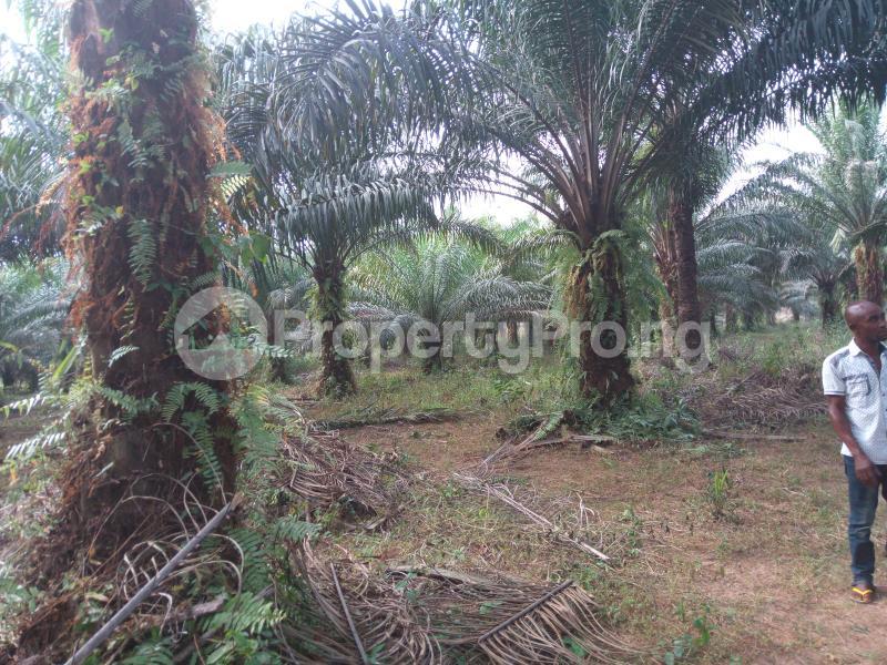 Land for sale Umuekwunne Ngor Okpuala Lga Imo State Ngor-Okpala Imo - 2