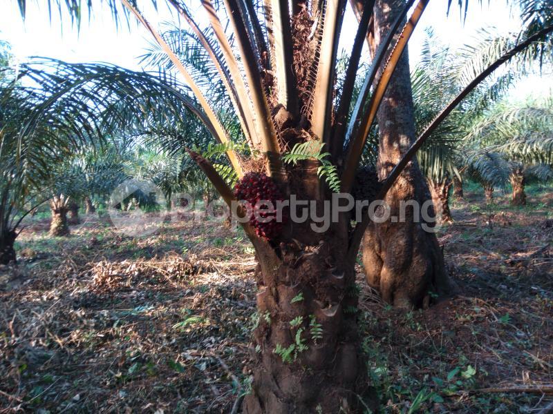 Land for sale Umuekwunne Ngor Okpuala Lga Imo State Ngor-Okpala Imo - 0