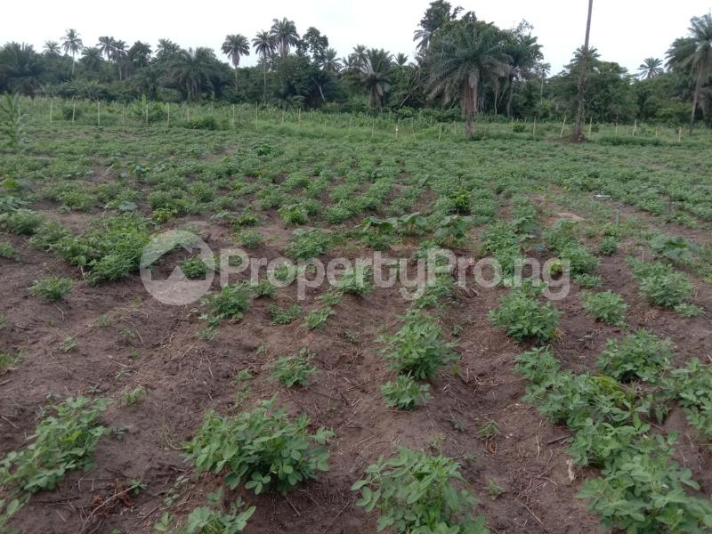 Commercial Land Land for sale Westagro Farm Land In Remo Ode Remo Remo North Ogun - 6