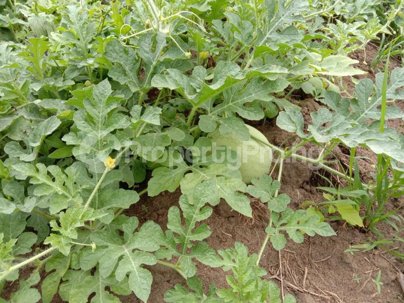 Commercial Land Land for sale Westagro Farm Land In Remo Ode Remo Remo North Ogun - 2