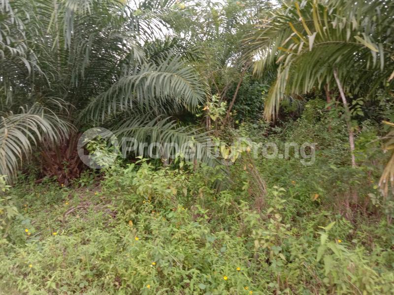 Factory for sale Iyana Ofa, Off Iwo/ibadan Road, Lagelu Local Government. Ibadan Oyo State. Oyedeji Lagelu Oyo - 3