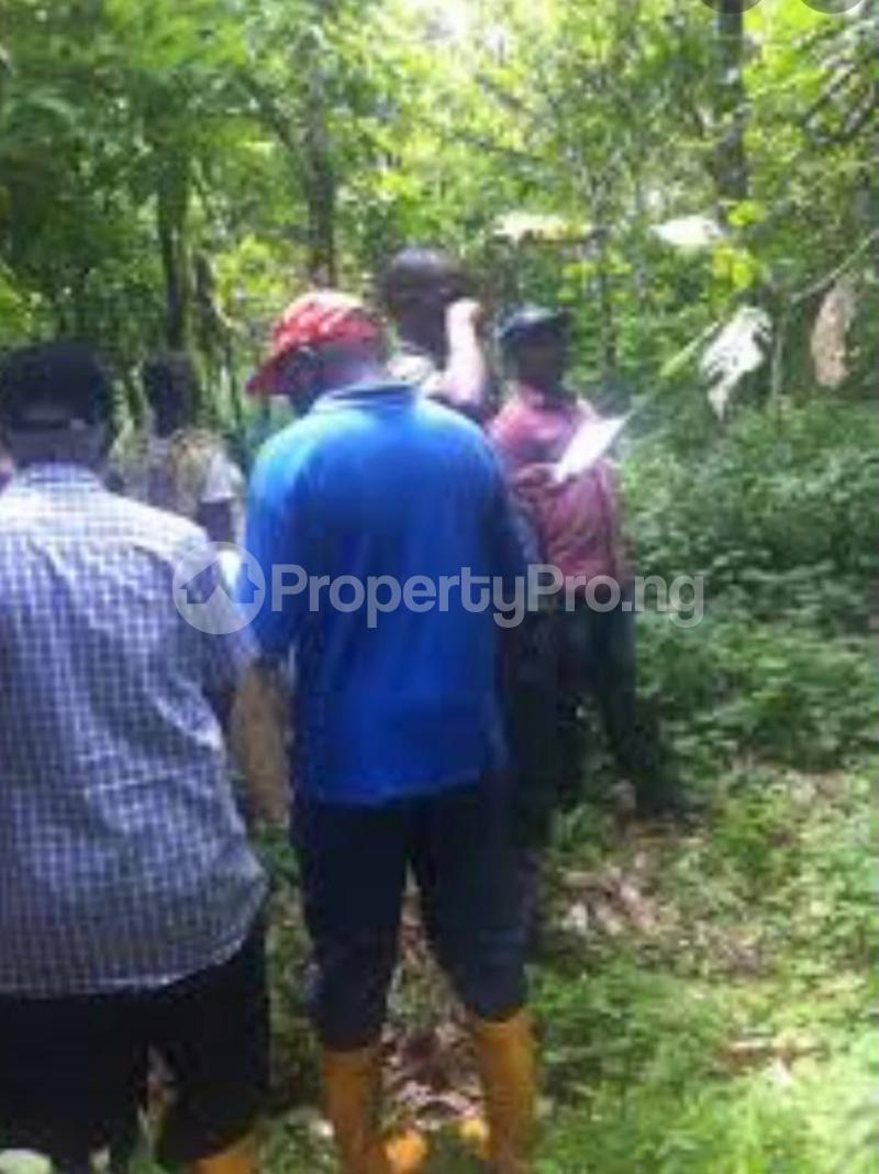Commercial Land Land for sale Irewole Osun - 3
