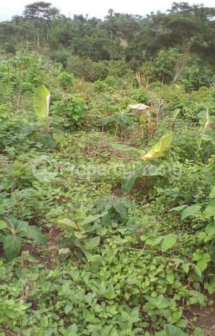 Commercial Land Land for sale Irewole Osun - 1