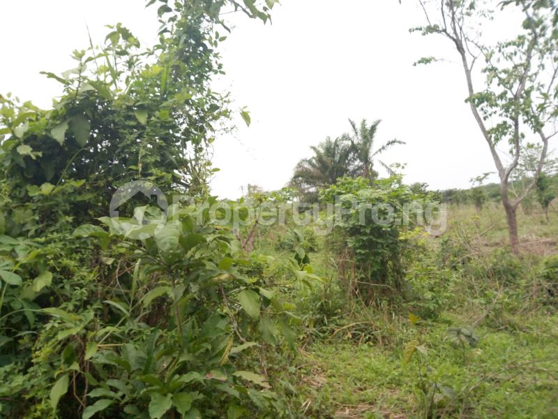 Commercial Land Land for sale Olode Village Ibadan Oyo - 0
