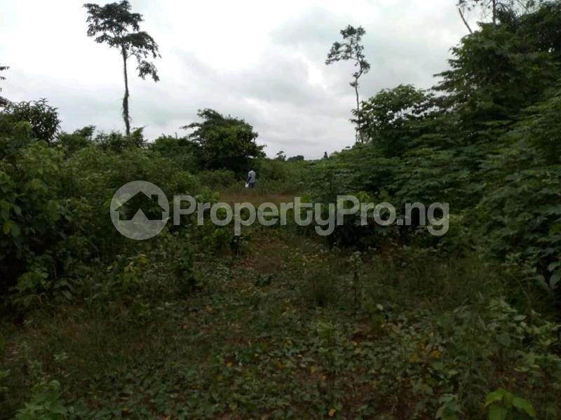 Mixed   Use Land Land for sale Ute Community, Ward 6 Uhunmwode Local Government Along Oluku Bypass Benin City Uhunmwonde Edo - 6