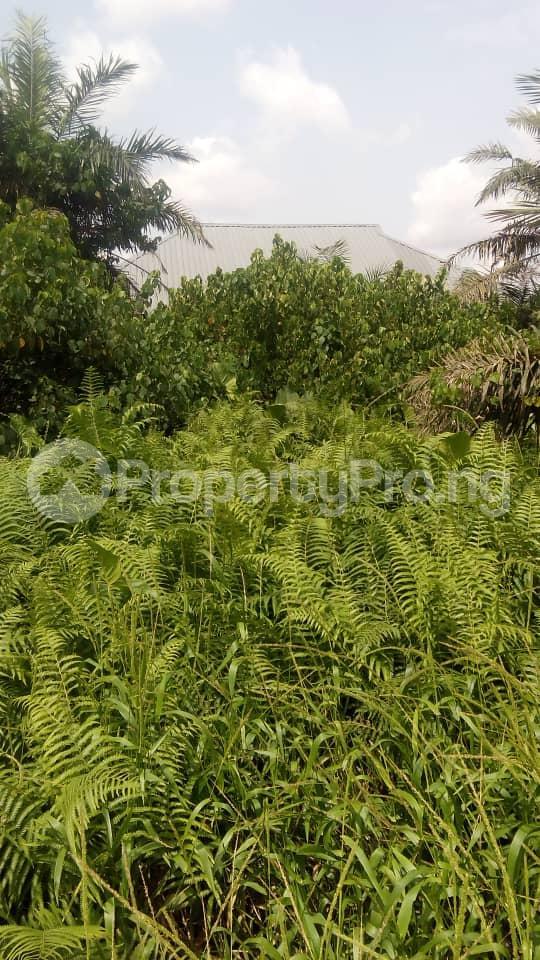 Residential Land Land for sale Akesan igando Akesan Alimosho Lagos - 1
