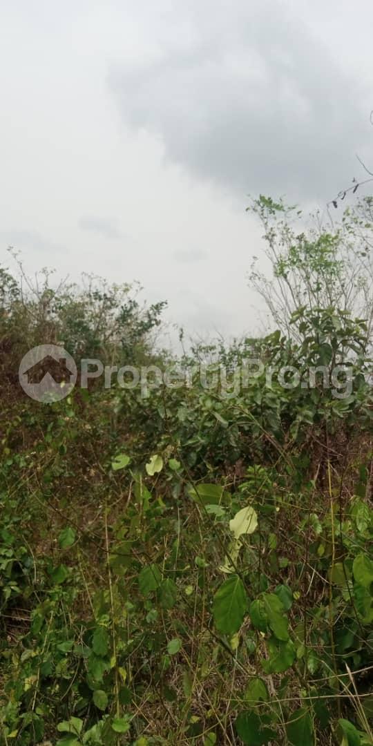 Residential Land for sale Amuloko, Area Omi Adio Ibadan Oyo - 3