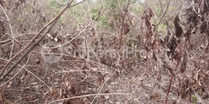Residential Land for sale Amuloko, Area Omi Adio Ibadan Oyo - 1