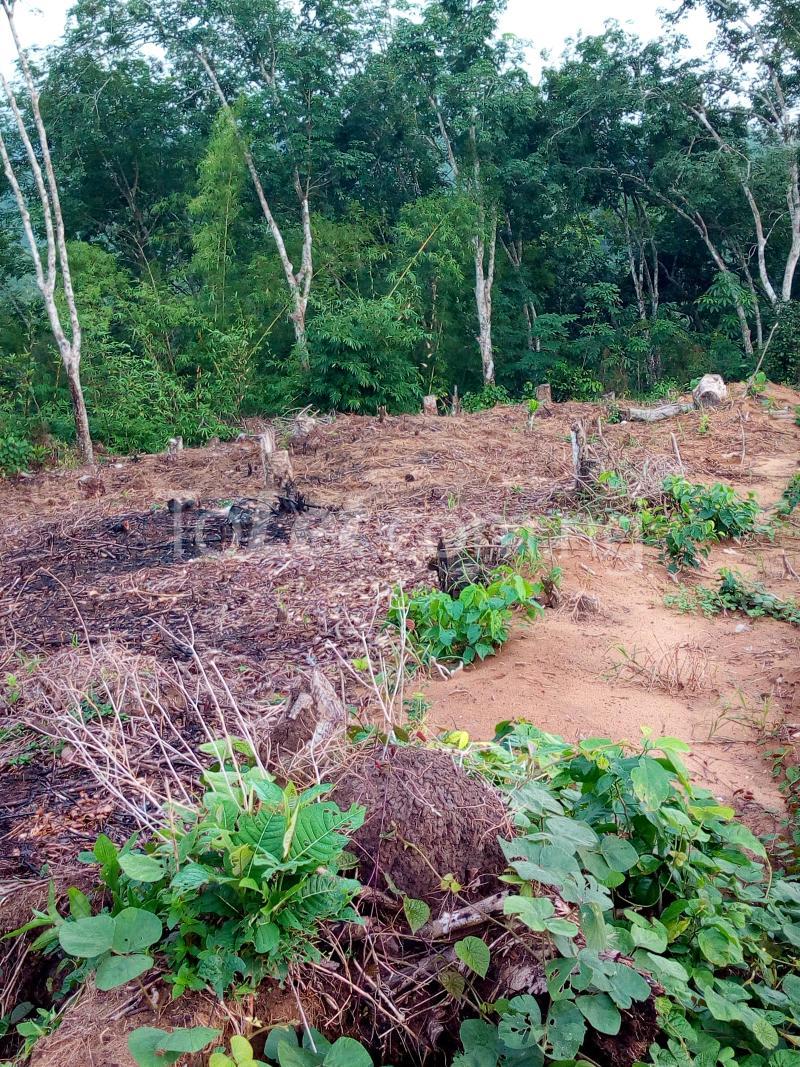Land for sale Akim Akim Odukpani Cross River - 1