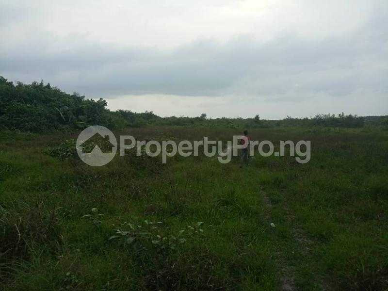 Mixed   Use Land Land for sale Max Gardens  Asaba Edo Ogwashi Uku   Aniocha South Delta - 0