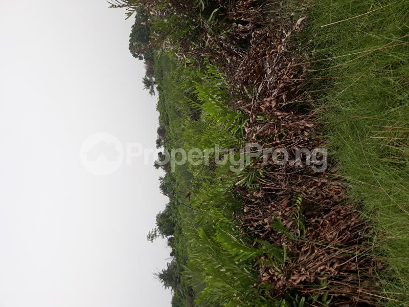 Residential Land Land for sale Located At Satellite Town FESTAC Amowu Odofin Lagos Mainland Lagos Nigeria  Satellite Town Amuwo Odofin Lagos - 18
