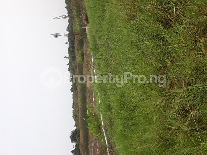 Residential Land Land for sale Located At Satellite Town FESTAC Amowu Odofin Lagos Mainland Lagos Nigeria  Satellite Town Amuwo Odofin Lagos - 11