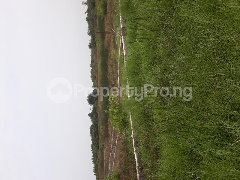 Residential Land Land for sale Located At Satellite Town FESTAC Amowu Odofin Lagos Mainland Lagos Nigeria  Satellite Town Amuwo Odofin Lagos - 23
