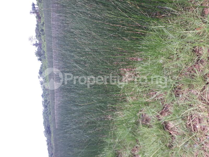 Residential Land Land for sale Located At Satellite Town FESTAC Amowu Odofin Lagos Mainland Lagos Nigeria  Satellite Town Amuwo Odofin Lagos - 52