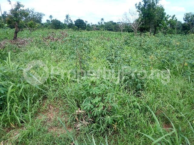 Commercial Land Land for sale Sede Street, Ibie Auchi Road, Jattu Etsako East Edo - 0