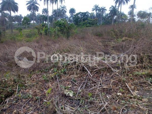 Land for sale Benin Auchi Road, Oluku Bypass Ute Community, Ward 6 Uhunmwode Lga, Uhunmwonde Uhunmwonde Edo - 0