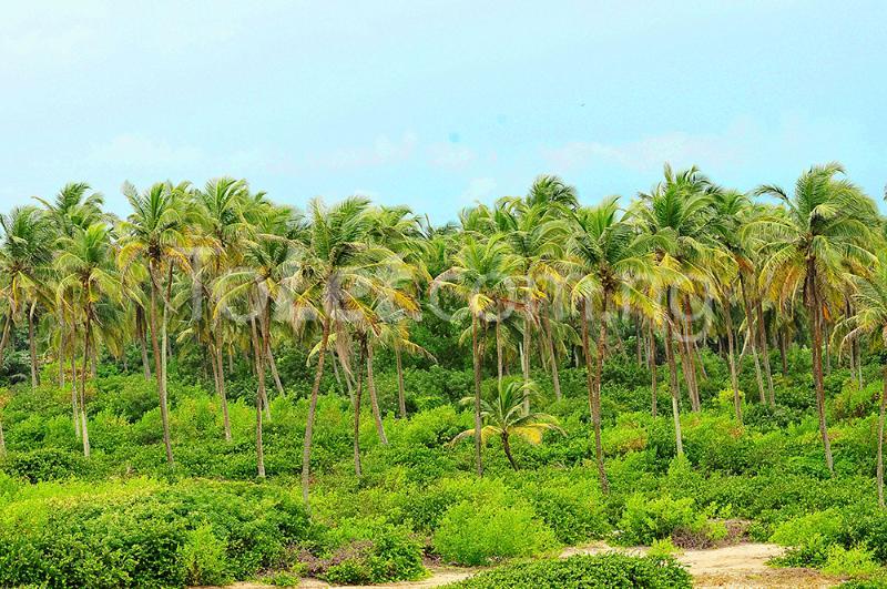 Commercial Land for sale Ilashe Island Ojo Ojo Lagos - 0
