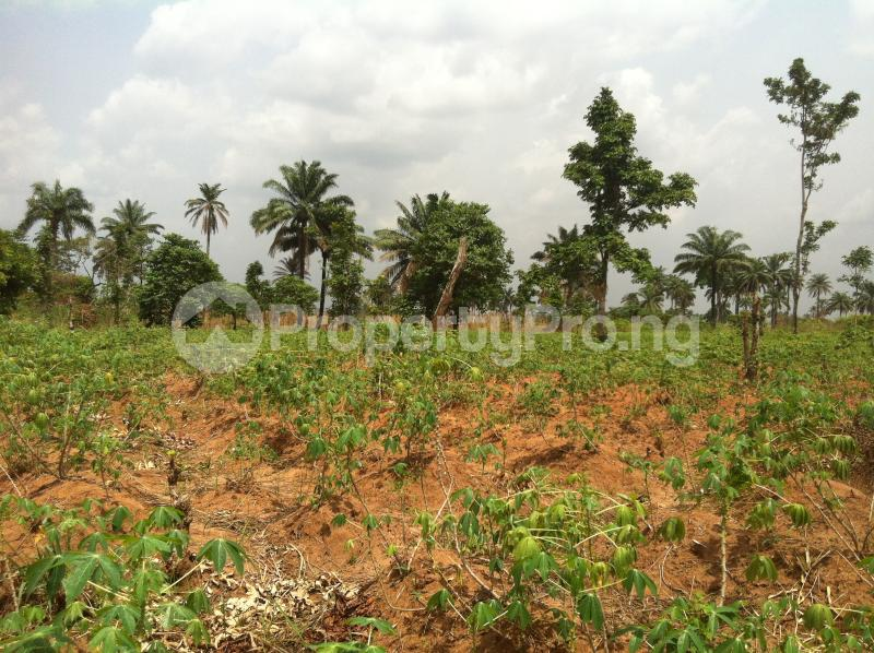 Residential Land Land for sale Within an Estate  Awka North Anambra - 3