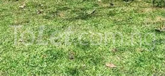 Land for sale Alaoma Residential Nekede Layout Owerri Imo - 1
