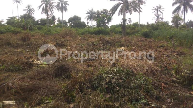Land for sale Badeku egbeda , Iwo road Iwo Rd Ibadan Oyo - 4